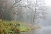 Herbst am Bihlafinger Weiher