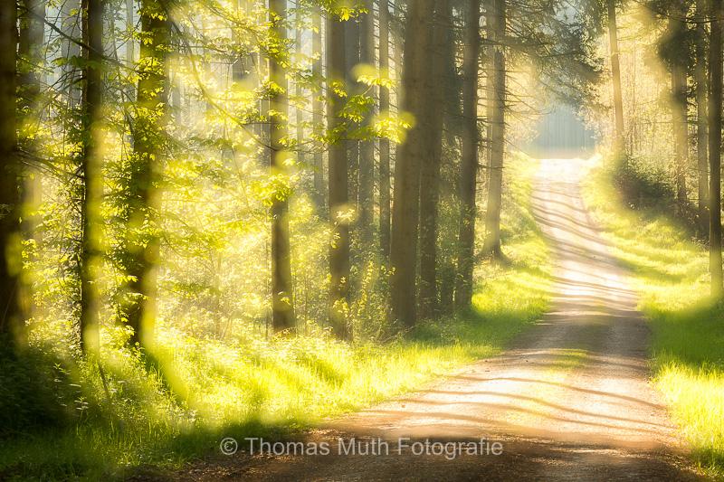 Morgenstimmung in den Holzstöcken